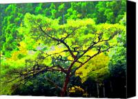 Trees Canvas Prints - Woods Canvas Print by Roberto Alamino