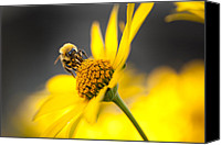Wildlife Pyrography Canvas Prints - Working bee Canvas Print by Pavlo Kolotenko