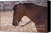 Horse Photographs Posters Canvas Prints - Working Cow Pony Canvas Print by Michelle Wrighton