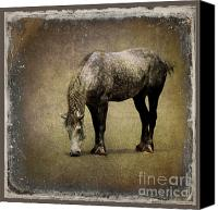 Sari Canvas Prints - Working Horse Canvas Print by Sari Sauls