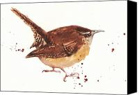 Wren Canvas Prints - Wren - Cheeky Wren Canvas Print by Alison Fennell