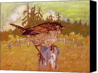 Collectable Painting Canvas Prints - Wren Canvas Print by Rob Owen