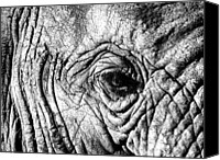 Animal Photo Canvas Prints - Wrinkled Eye Canvas Print by Douglas Barnard