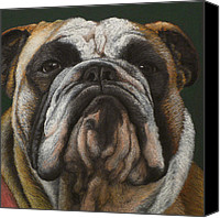 Bull Pastels Canvas Prints - Ya wanna piece a me Canvas Print by Norm Holmberg