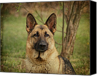 Alsatian Canvas Prints - Yahtzee - German Shepherd Canvas Print by Sandy Keeton