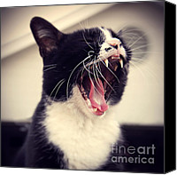 Tuxedo Cat Canvas Prints - Yawn Like You Mean It Canvas Print by Trish Mistric