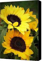 Sunflowers Canvas Prints - Yellow and Green Canvas Print by Cathie Tyler