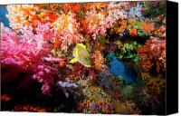 Southeast Asia Canvas Prints - Yellow Banded Sweetlip Fish And Coral Canvas Print by Beverly Factor