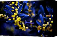 Blue Leaf Canvas Prints - Yellow Bursts in Blue Field Canvas Print by Clayton Bruster