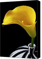 Delicate Canvas Prints - Yellow calla lily in black and white vase Canvas Print by Garry Gay