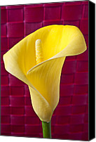 Callas Canvas Prints - Yellow Calla Lily Red Mat Canvas Print by Garry Gay