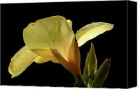 Canna Canvas Prints - Yellow Canna Canvas Print by Jeannie Burleson