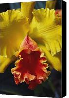 Cattleya Canvas Prints - Yellow Cattleya Orchid Canvas Print by Greg Vaughn - Printscapes