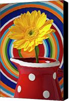 Chrysanthemums  Canvas Prints - Yellow daisy in red pitcher Canvas Print by Garry Gay
