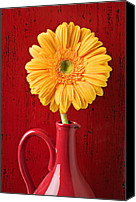 Chrysanthemums  Canvas Prints - Yellow daisy in red vase Canvas Print by Garry Gay