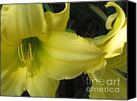 Diane Hewitt Canvas Prints - Yellow Daylily Canvas Print by Diane Hewitt