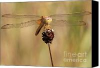 Wandering Canvas Prints - Yellow Dragonfly Canvas Print by Carol Groenen