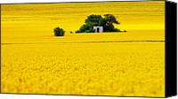 Rapeseed Canvas Prints - Yellow Canvas Print by Evgeni Dinev