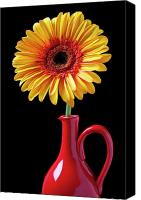 Flower Design Canvas Prints - Yellow fancy daisy in red vase Canvas Print by Garry Gay