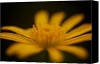 Macro Photography Canvas Prints - Yellow Flower Canvas Print by Arj Munoz