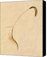 Foxtail Canvas Prints - Yellow Foxtail Still Life Canvas Print by Tom Mc Nemar