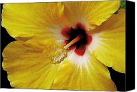 Hawaiian Islands Canvas Prints - Yellow Hibiscus With Red Center Canvas Print by James Temple