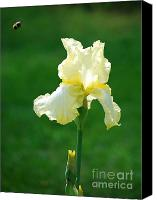 Wild Horse Pastels Canvas Prints - Yellow Iris with Bee Canvas Print by Sharen Duffing
