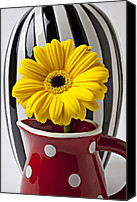 Flower Design Canvas Prints - Yellow mum in pitcher  Canvas Print by Garry Gay