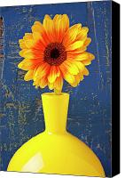 Chrysanthemums  Canvas Prints - Yellow mum in yellow vase Canvas Print by Garry Gay