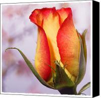 Rose Flower Canvas Prints - Yellow Orange Rose Canvas Print by Mike McGlothlen