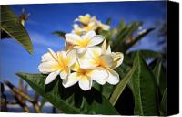 Michael Ledray Canvas Prints - Yellow Plumeria flowers on Maui Hawaii Canvas Print by Michael Ledray