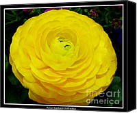 Father Christmas Canvas Prints - Yellow Ranunculus Flower Canvas Print by Rose Santuci-Sofranko