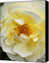 Debbie Canvas Prints - Yellow Rose Canvas Print by Deborah  Crew-Johnson