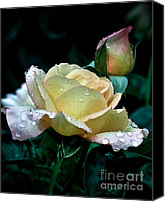 Rose Bud Canvas Prints - Yellow Rose  Canvas Print by Julie Palencia