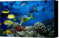 Robinson Canvas Prints - Yellow Scuba Diver Canvas Print by Ed Robinson - Printscapes