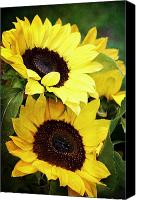 Sunflowers Canvas Prints - Yellow Sunflowers Canvas Print by Cathie Tyler