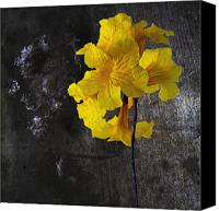 Gleam Canvas Prints - Yellow Trumpet Canvas Print by Skip Nall