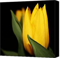 Northwest Art Canvas Prints - Yellow Tulip Canvas Print by Cathie Tyler
