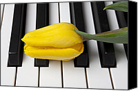 Piano Canvas Prints - Yellow tulip on piano keys Canvas Print by Garry Gay