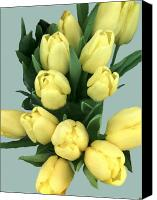 Lovely Looking Flower Canvas Prints - Yellow Tulips Canvas Print by Debra     Vatalaro