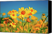 Taos Canvas Prints - Yellow Wildflowers Canvas Print by Sandy L. Kirkner