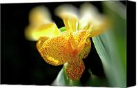 Canna Canvas Prints - Yellow with Red Spots Canvas Print by Douglas Barnard