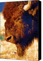 Bison Canvas Prints - Yellowstone Buffalo Canvas Print by Diane E Berry