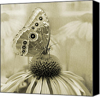 Garden Flowers Pyrography Canvas Prints - Yesterdays Visitor Canvas Print by Melisa Meyers