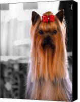 Dog Photo Canvas Prints - Yorkshire Terrier Canvas Print by Jai Johnson