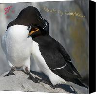 Razorbill Photo Canvas Prints - You are my Valentine... Canvas Print by Nina Stavlund