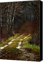Whitetail Buck Canvas Prints - Young Buck and Autumn Canvas Print by Thomas Young