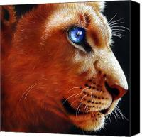 Lion Painting Canvas Prints - Young Lion Canvas Print by Jurek Zamoyski