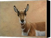 Young Drawings Canvas Prints - Young Pronghorn Canvas Print by James W Johnson