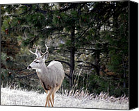 Mule Deer Canvas Prints - Youngen Buck Canvas Print by Deniece Platt